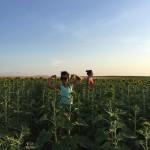 flexing in the sunflower field