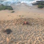 2 tortoises chilling on the beach. #tortoisepose